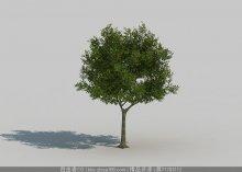 树3d模型