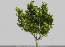 悬铃木3d模型