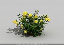 黄花灌木3d模型